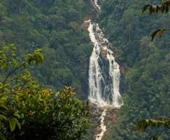 Honeymoon Tour To Wayanad