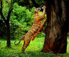 Wayanad Holiday Package